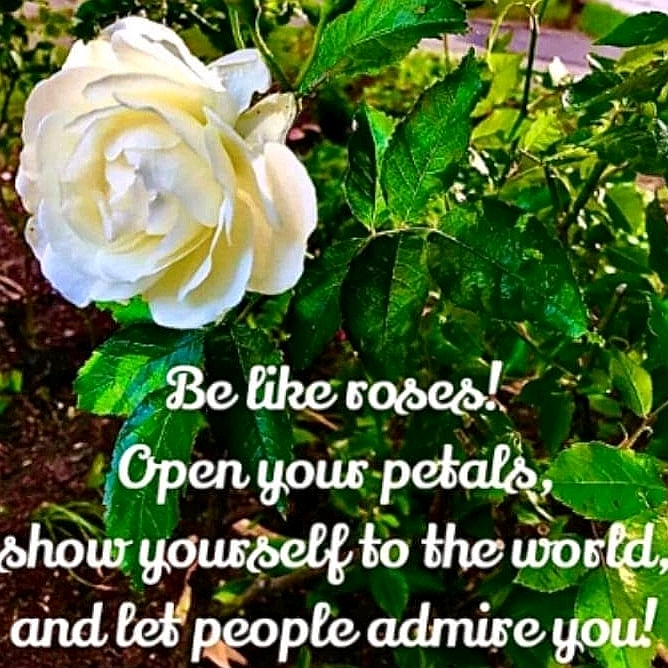 Be kind to others. Be a rose, not a thorn.#BeKind #ShowRespect #GiveASmile #BeASolution